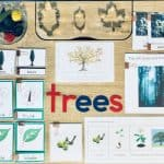 printables, puzzles, and materials for montessori tree unit study