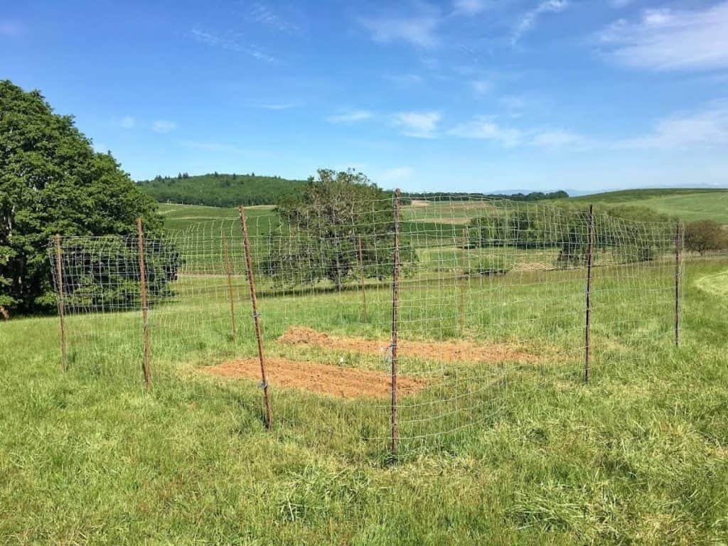 In-Ground Garden Beds Enclosed in Fencing on Farm