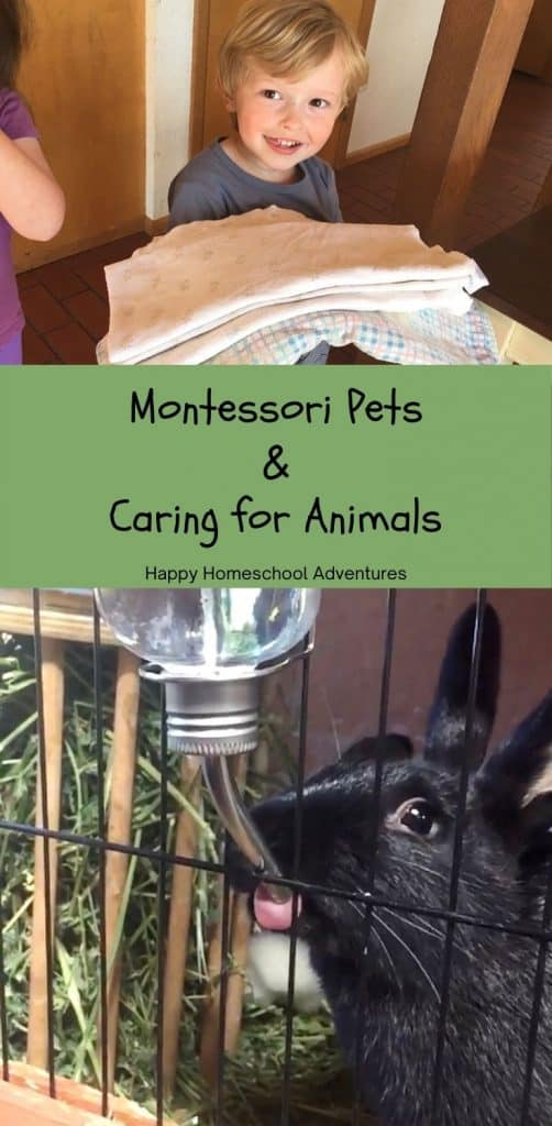 Check out how & why we include Montessori Pets and Caring for Animals in our homeschool Practical Life routine with two pet rabbits.  #montessori #homeschool #montessoripracticallife #montessoripet