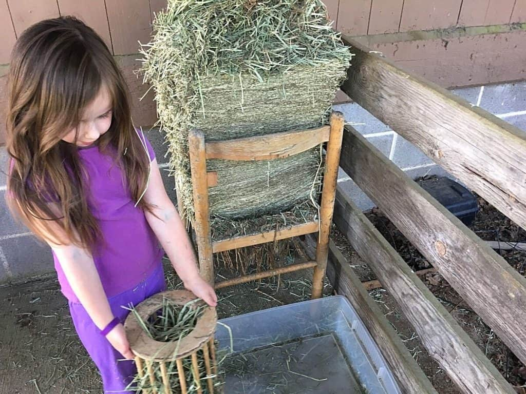 Child holding rabbit hay feeder next to hay bale for Practical Life Montessori pets and caring for animals